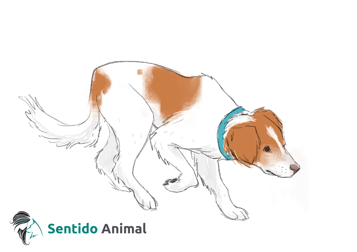 Posición de acecho – comunicación canina