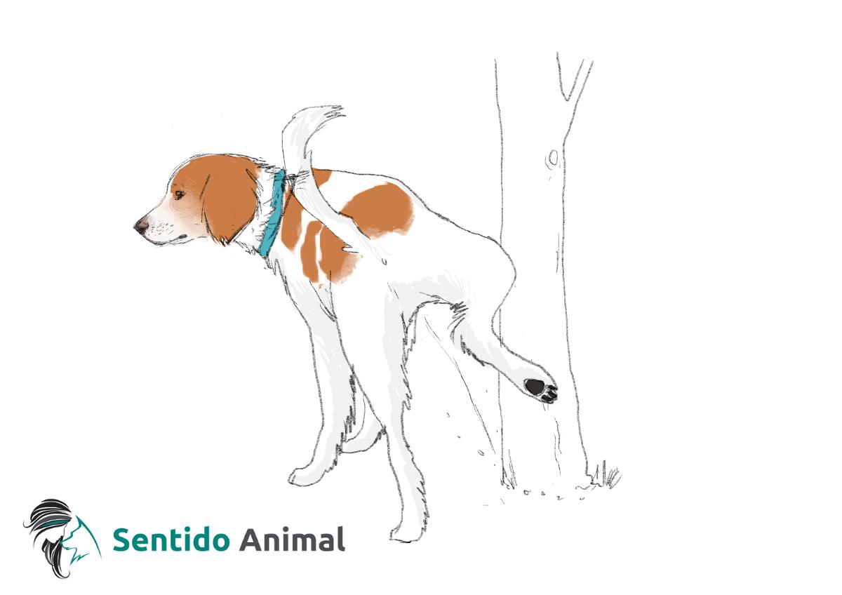 Señal de hacer pis – comunicación canina