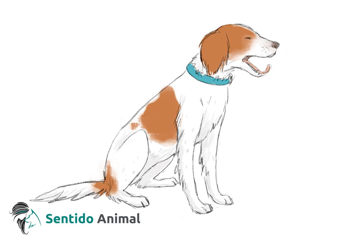 Señal de bostezo – comunicación canina