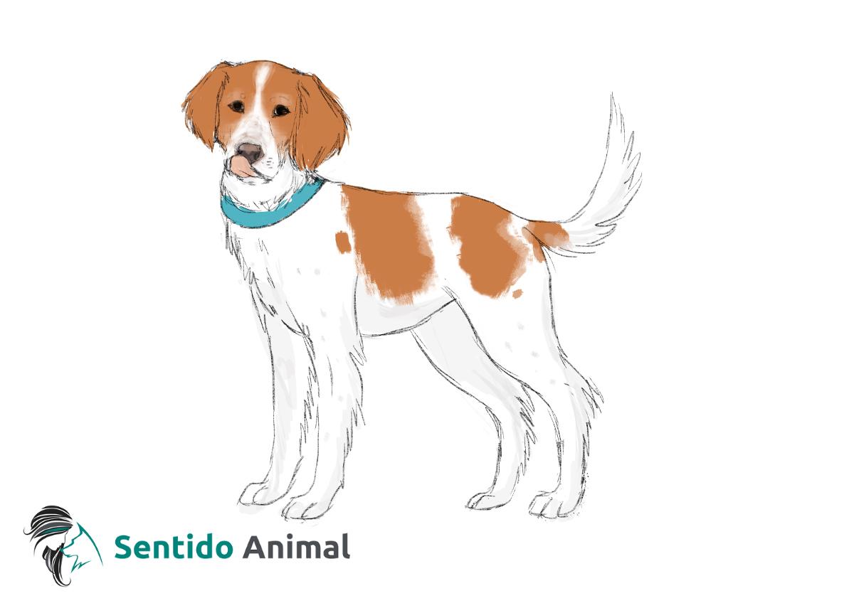 Señal de lamerse la trufa – comunicación canina