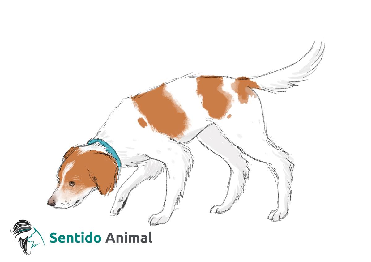 Olfatear el suelo – comunicación canina