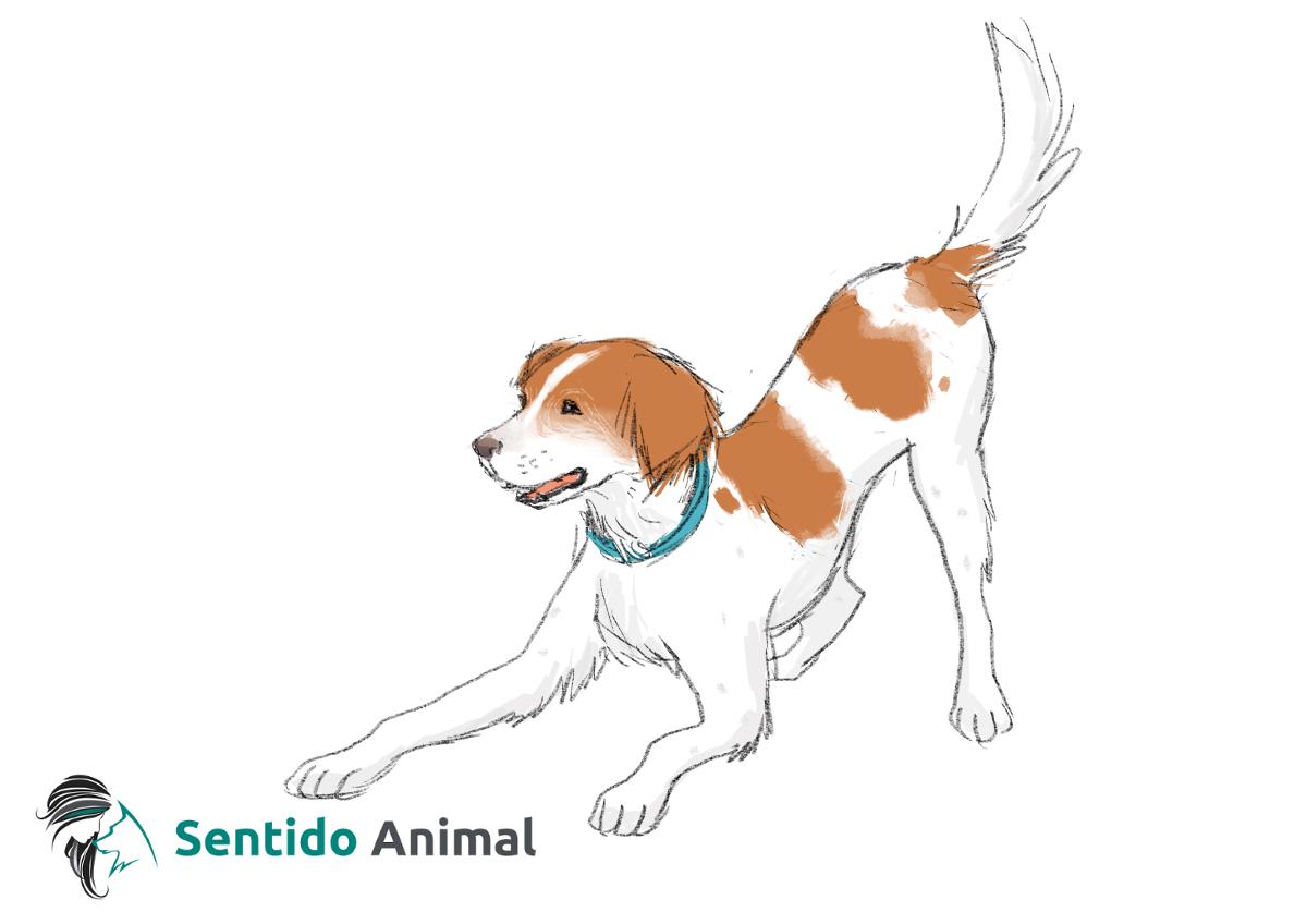 Posición de juego – comunicación canina