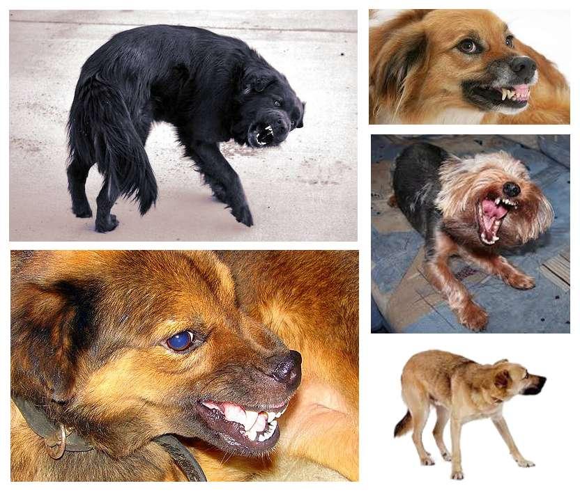 Perros amenazantes por miedo
