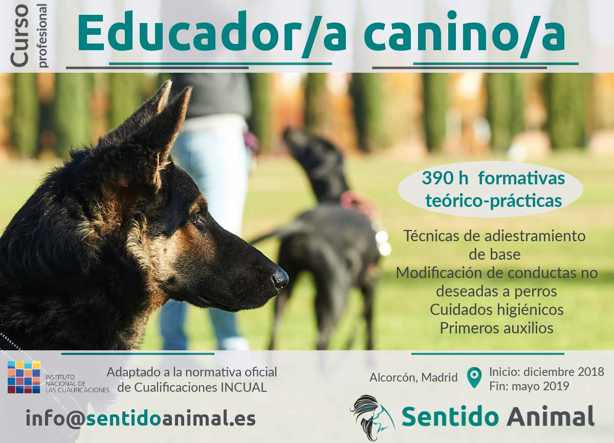 Curso profesional de Educador/a Canino/a
