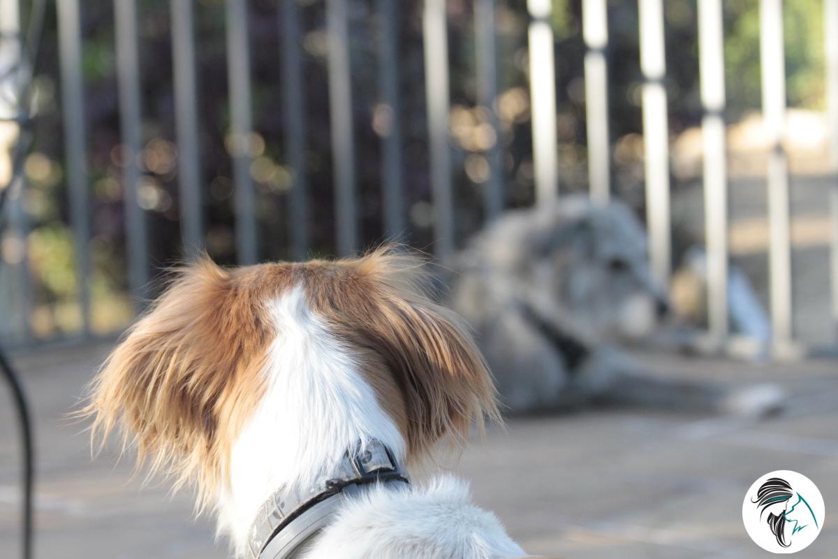 Ayudando a los perros que nos ayudan a cambiar comportamientos caninos
