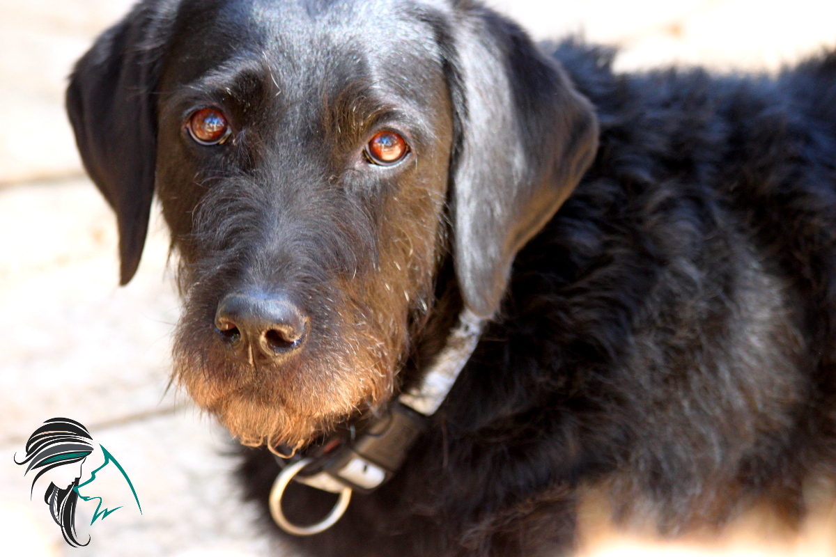 Postureo y falta de sensibilidad en las Intervenciones Asistidas con Animales