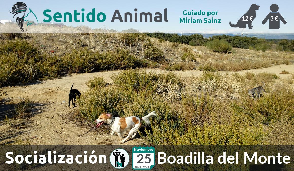 Socialización canina y paseo con perros – noviembre 2018