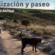 Socialización canina y paseo con perros