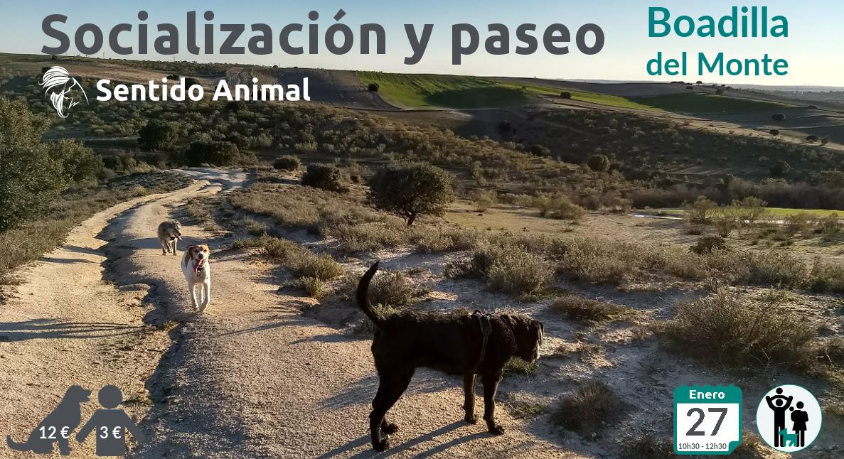 Socialización canina y paseo – enero 2019