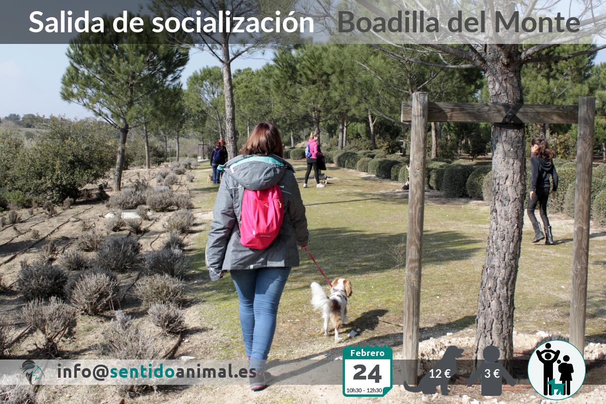 Socialización canina y paseo – febrero 2019