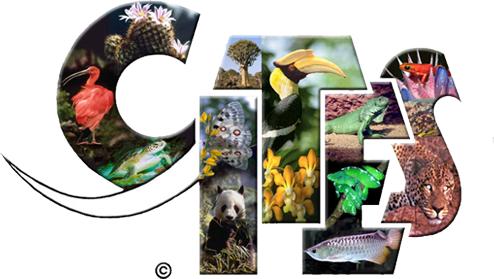 ¿Qué es CITES y por que es tan importante conocerlo?