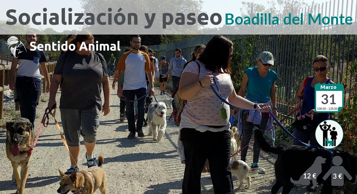 Socialización canina y paseo en Boadilla del Monte
