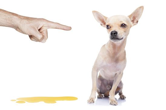 Pis de perro