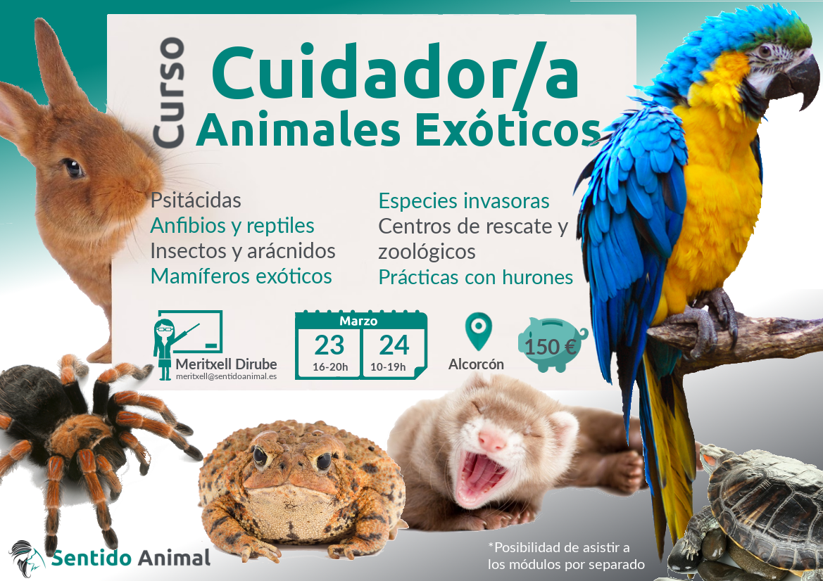 Curso de animales exóticos