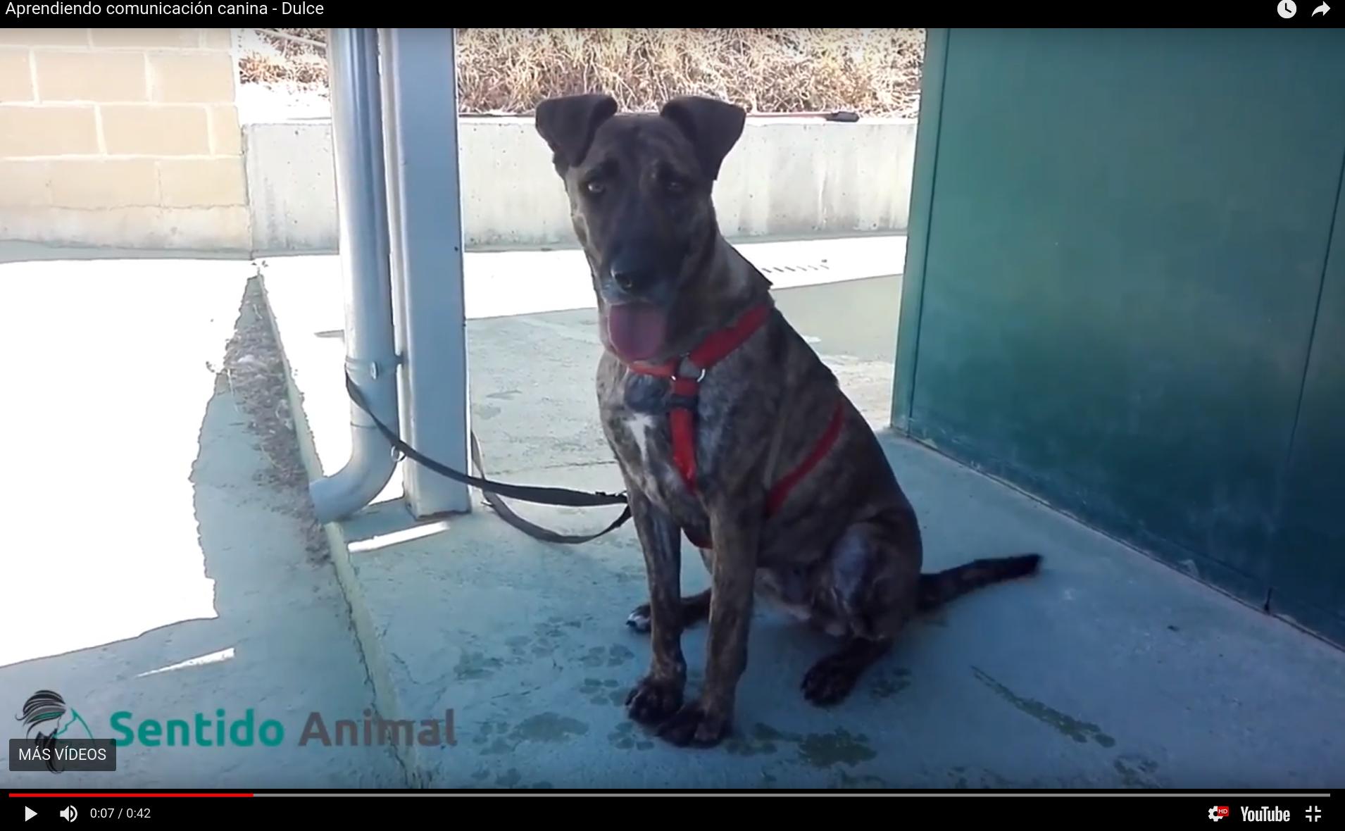 Aprendiendo sobre comunicación canina – Dulce