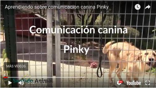 Aprendiendo sobre comunicación canina – Pinky