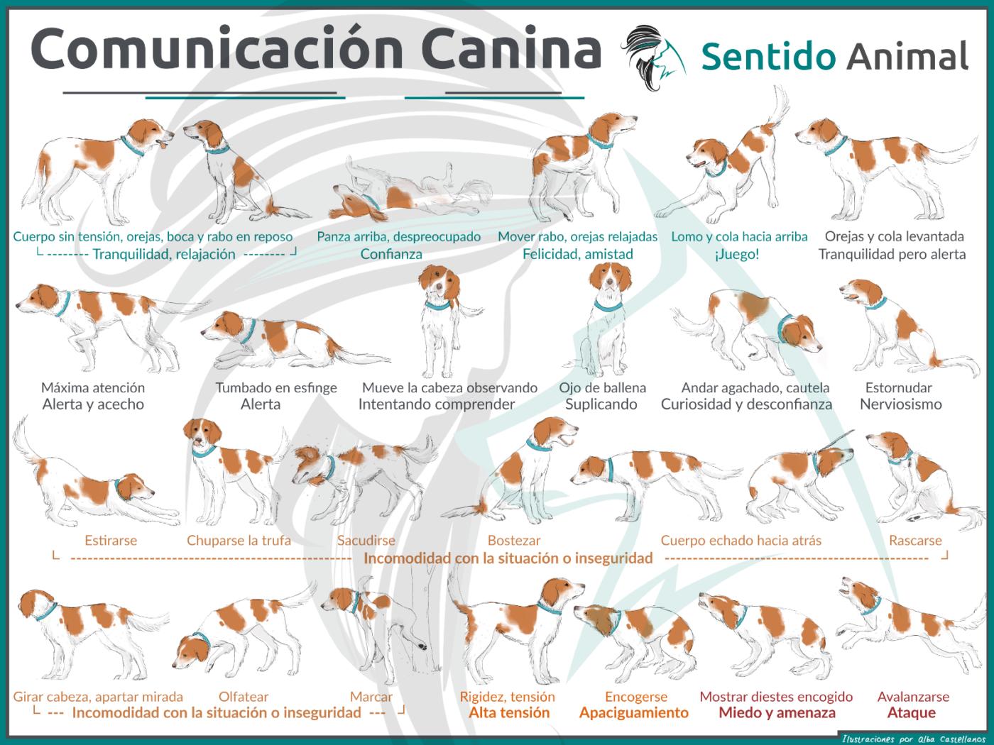 comunicación canina - posición de ataque
