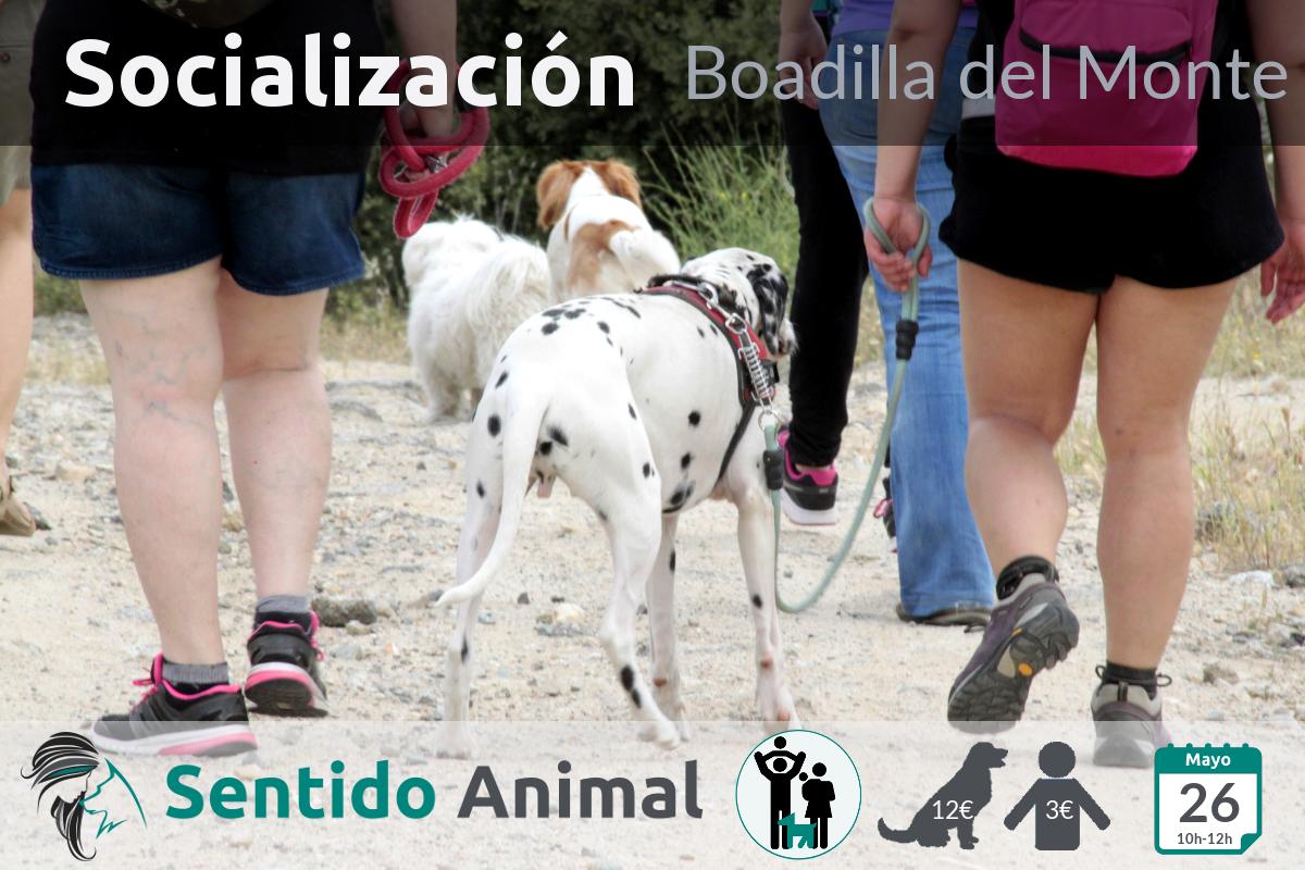 Socialización canina y paseo – mayo 2019