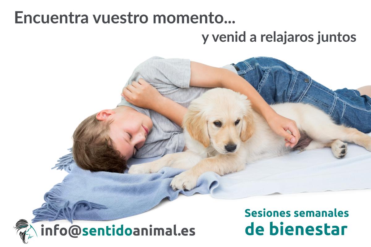 Sesión de bienestar con perros – 22 febrero