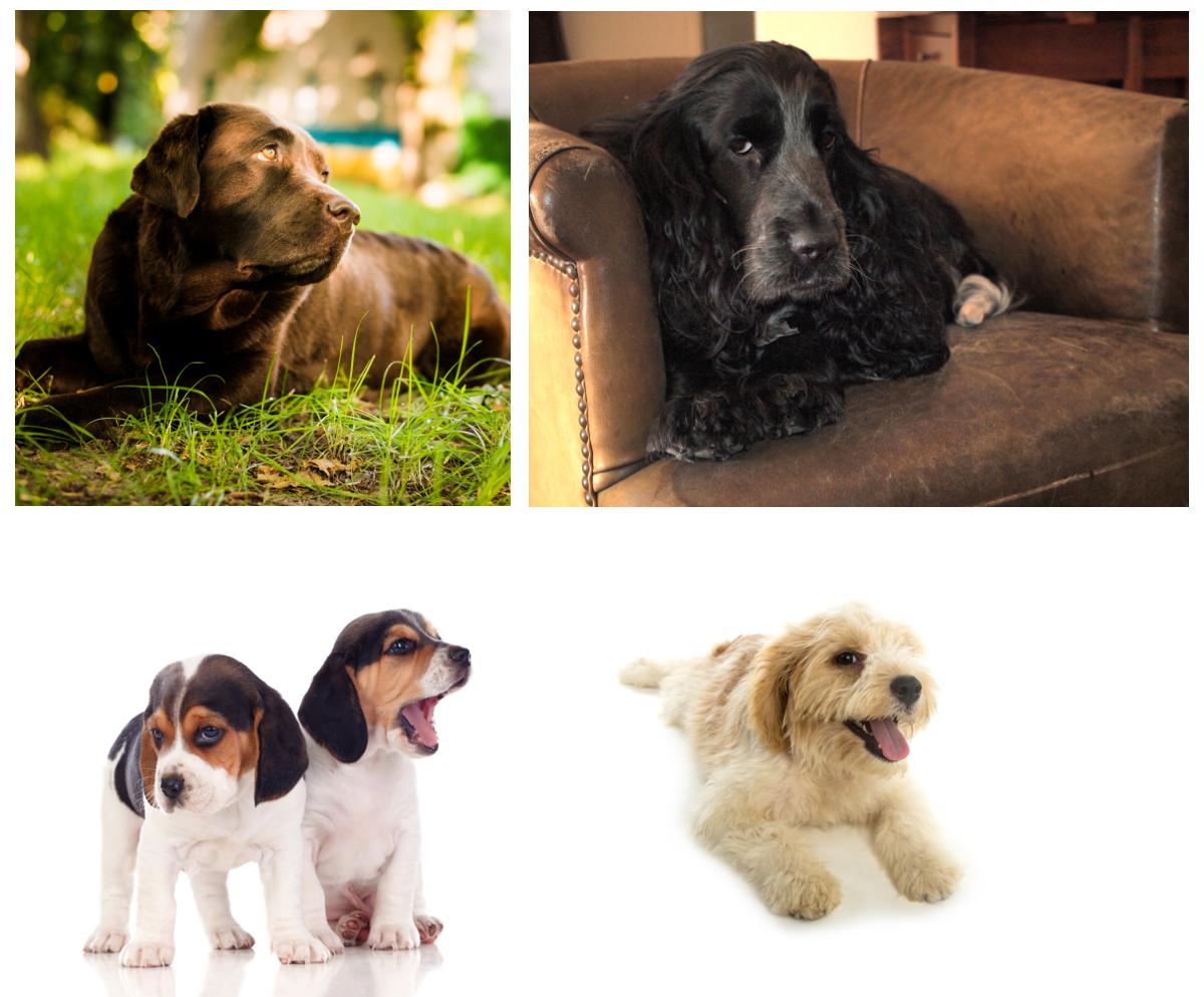 Comunicación canina - perros girando la cabeza
