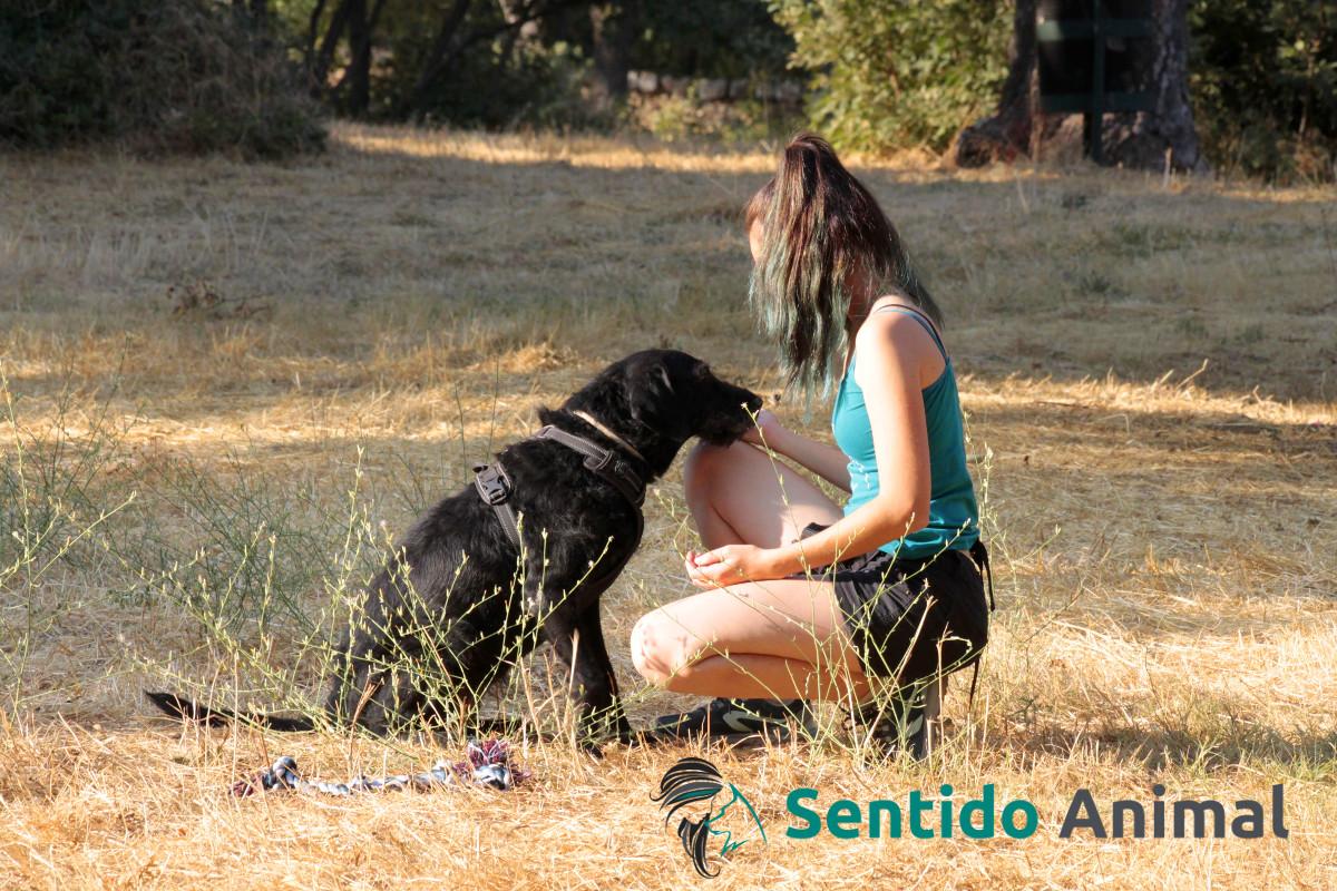 apoyo a perros con miedo