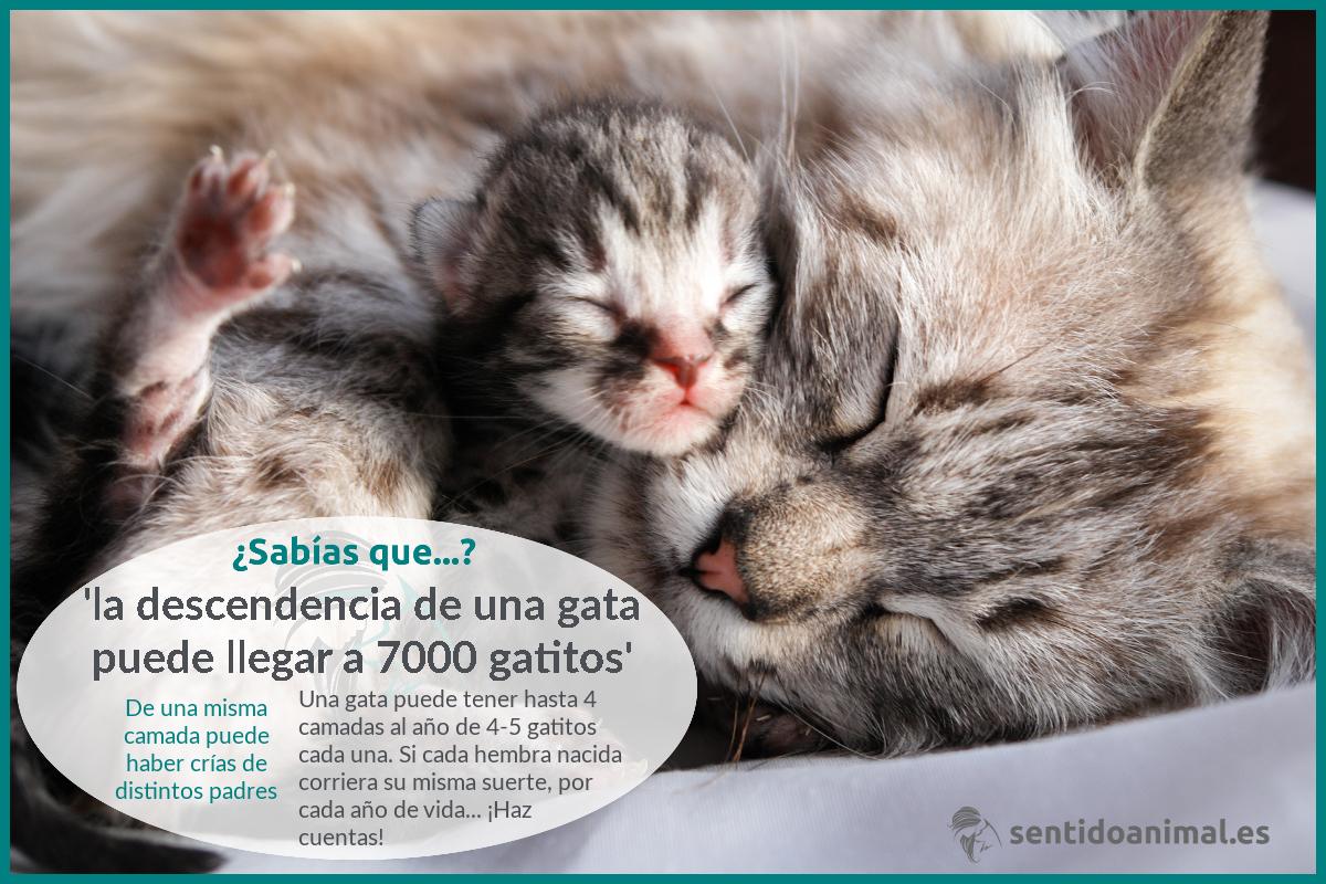 ¿Sabías que una sola gata podría repoblar el mundo?