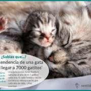 Descendencia de las gatas