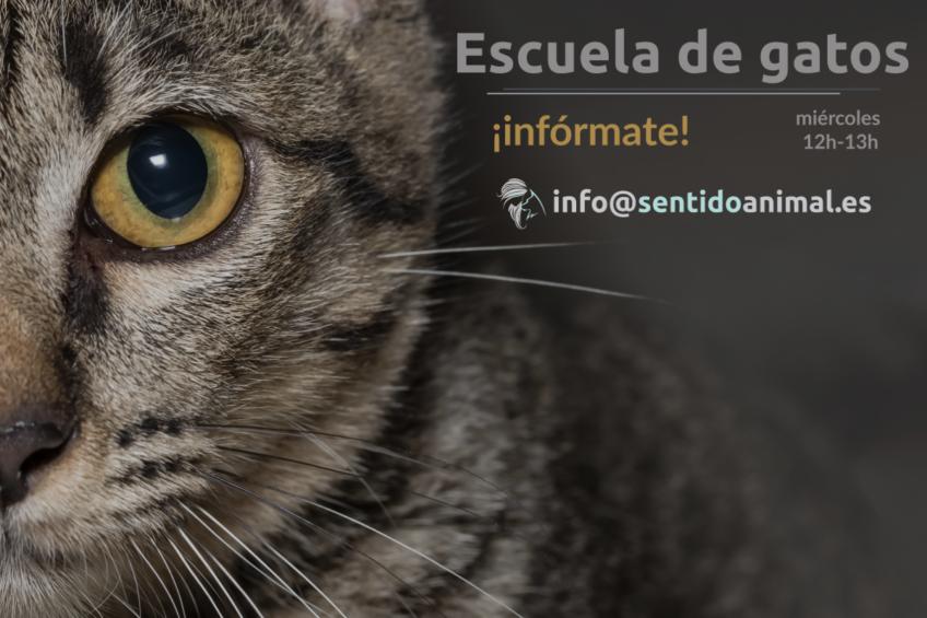 Escuela de gatos