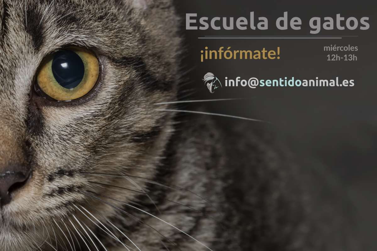 Comienzo de escuela de gatos