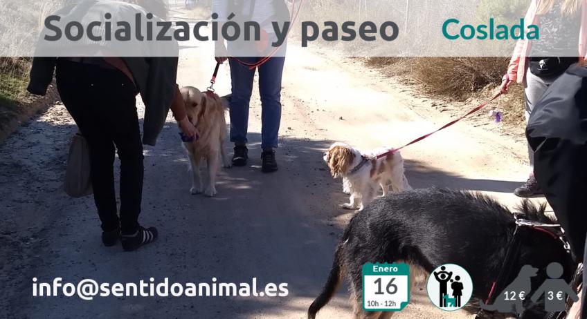 Salida de socialización canina en Coslada, Madrid