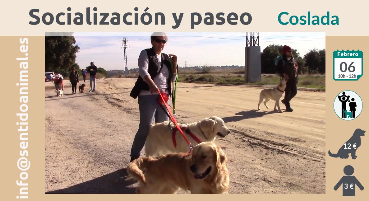 Socialización canina y paseo miércoles – febrero 2019
