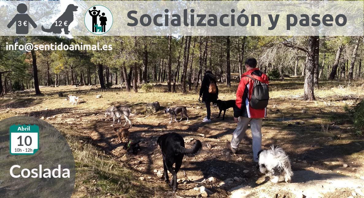 Socialización canina y paseo miércoles – abril 2019