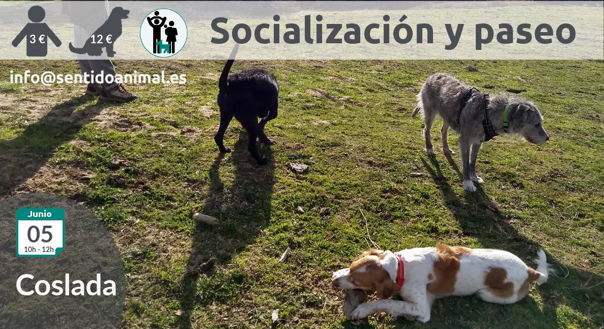 Socialización canina y paseo miércoles – mayo 2019