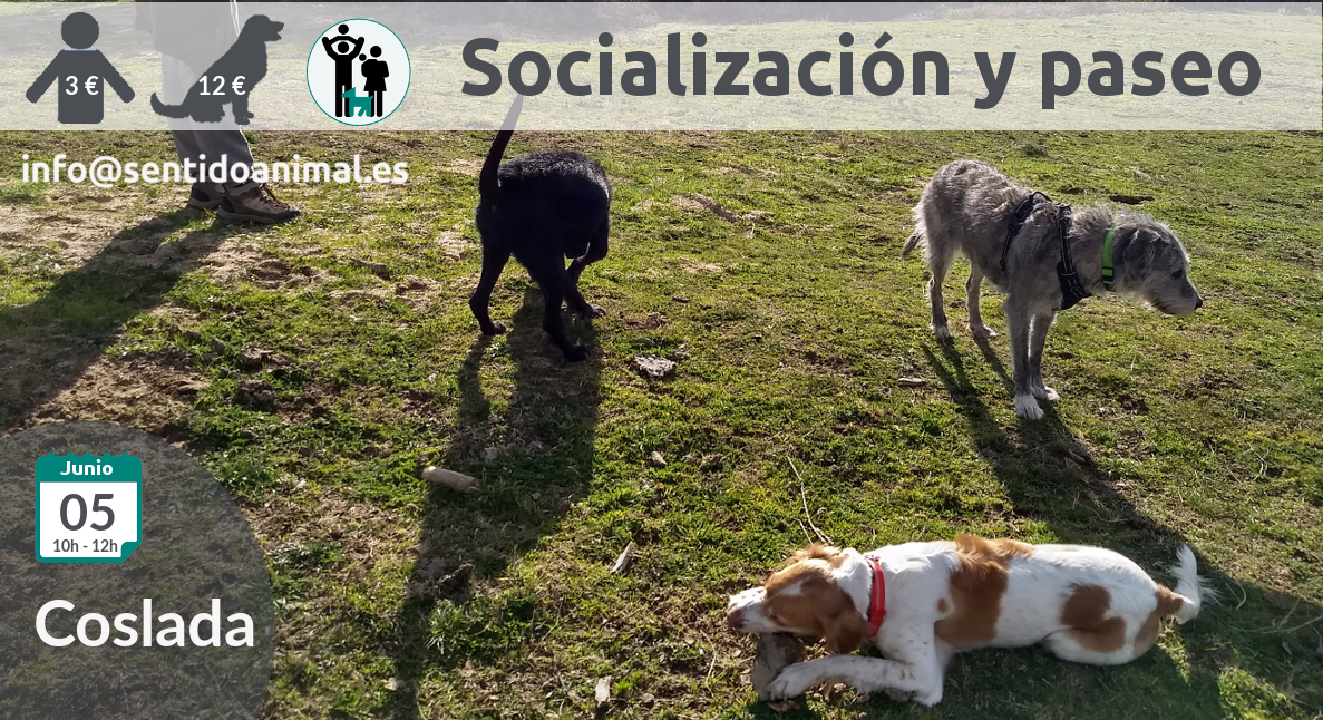 2019-05-08_Coslada salida de socialización canina