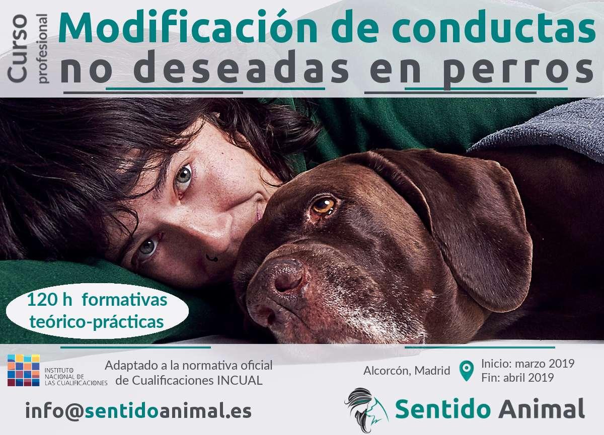 Curso profesional de modificación de conductas no deseadas en perros