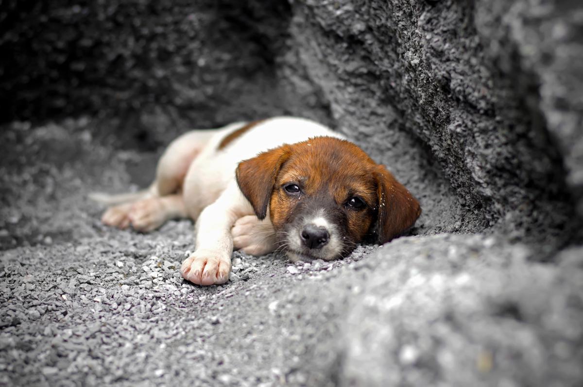 Cachorro sin hogar