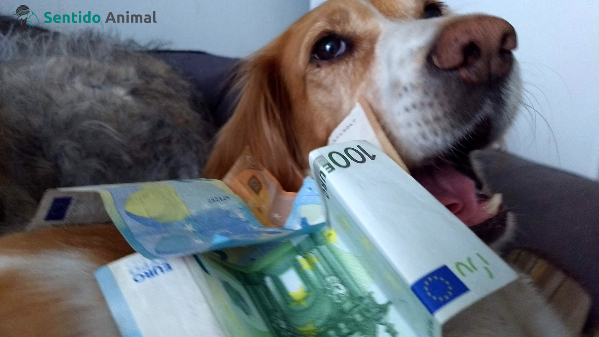 ¿Cuánto cuesta un perro?