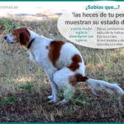 La importancia de las heces de un perro