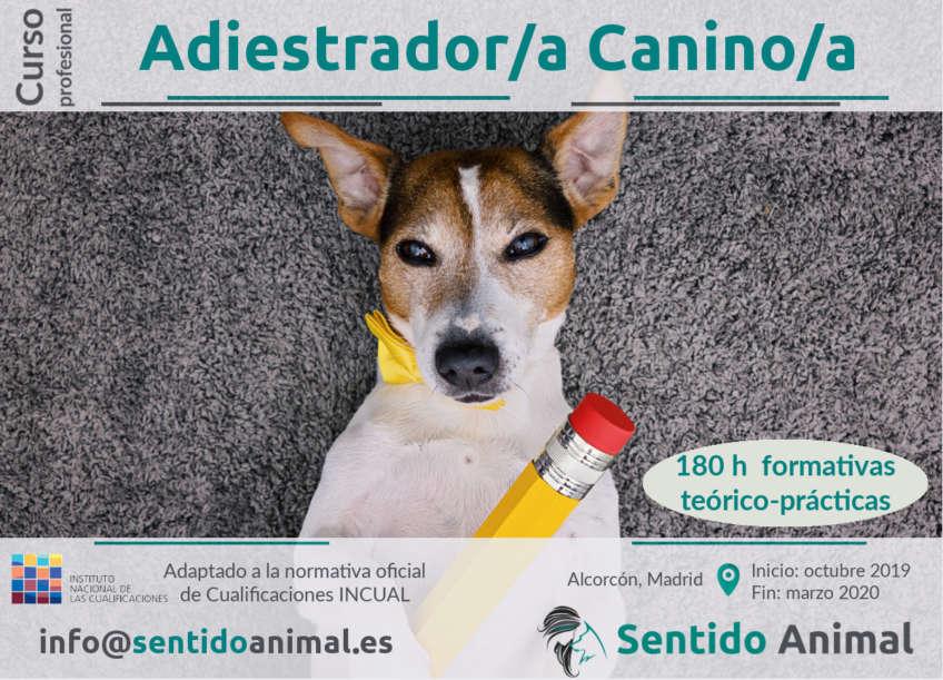 Curso profesional de Adiestrador Canino