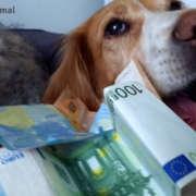 Cuánto cuesta un perro
