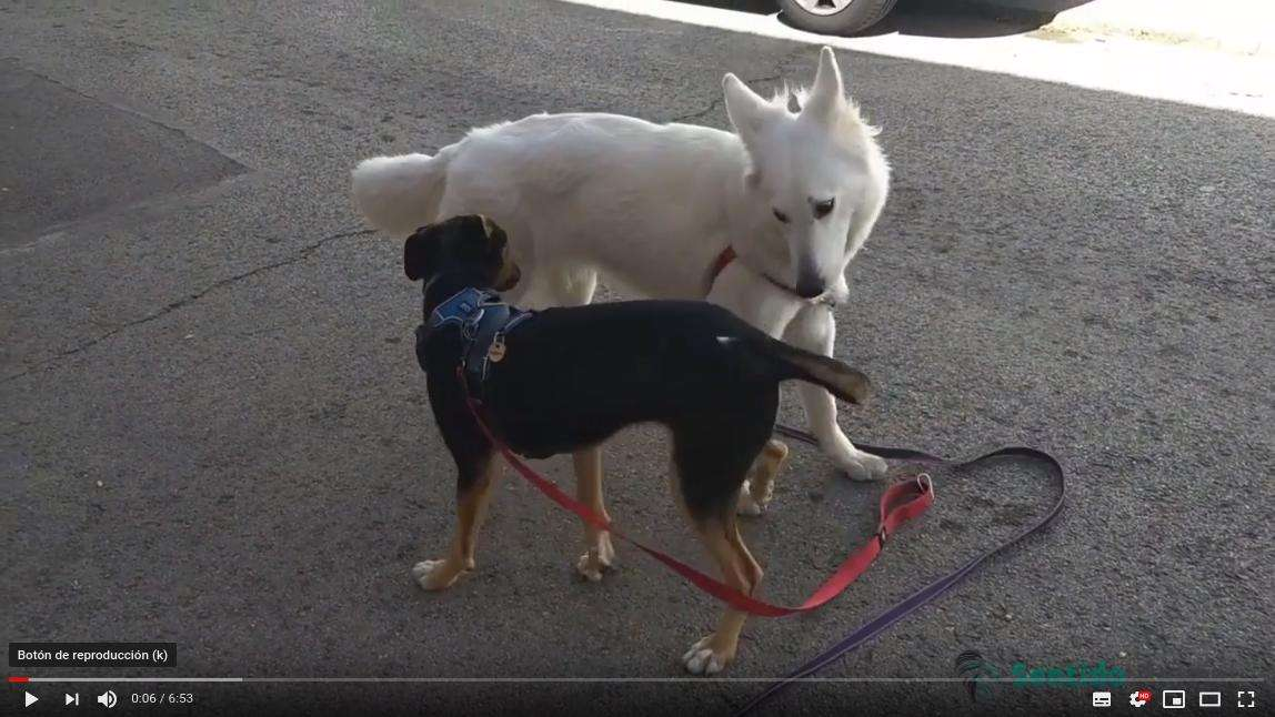 Comunicación canina – Kala y Robin