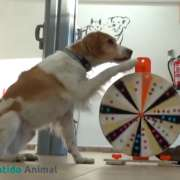 Ruleta-adiestramiento-canino
