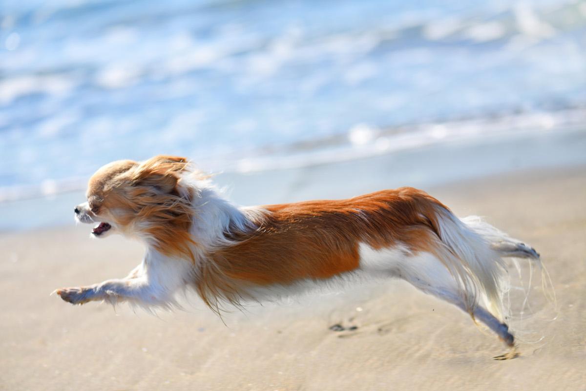Los perros de terapia también corren