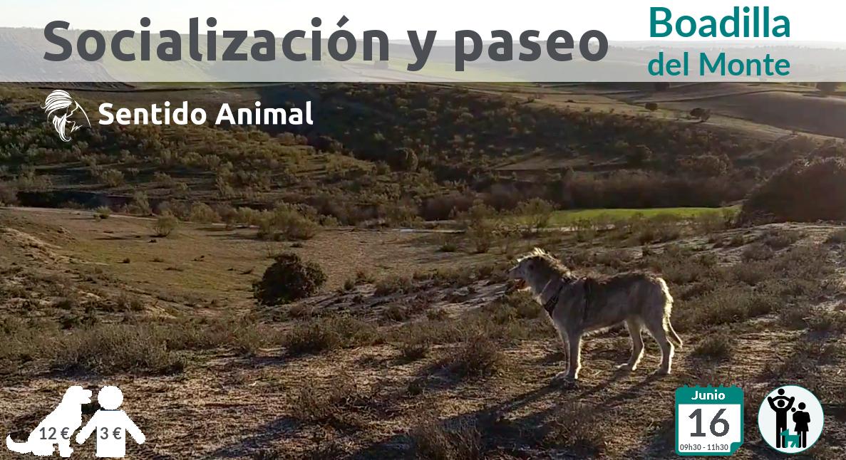Socialización canina y paseo – junio 2019