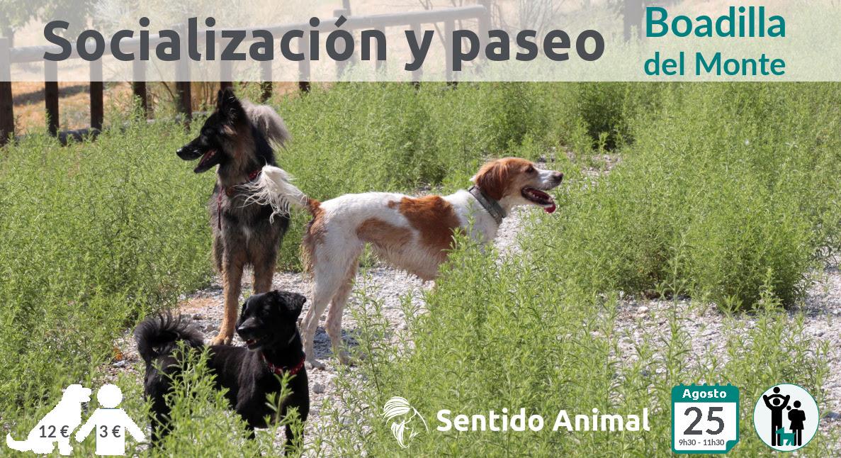 Socialización canina y paseo – agosto 2019