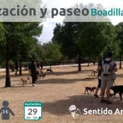 Socialización canina Boadilla del Monte