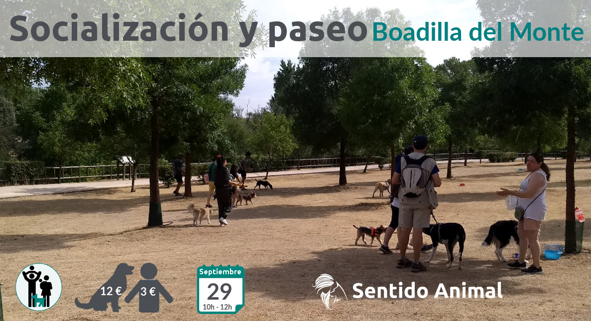 Socialización canina y paseo – septiembre 2019