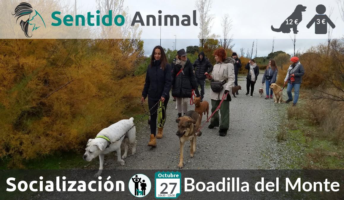 Socialización canina y paseo – octubre 2019