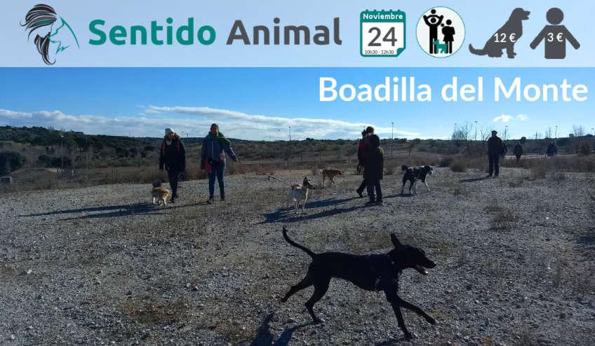 Socialización canina - noviembre 2019