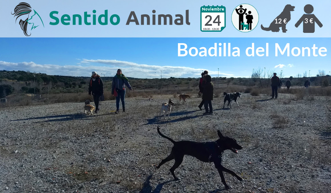 Socialización canina y paseo – noviembre 2019